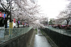神田川(高井戸)